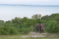 Album photos - Ouganda : Queen Elizabeth NP